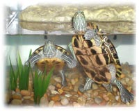 red-eared-slider-tank-options