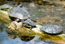 Easy At-Home Safe Turtle Cleaning Supplies